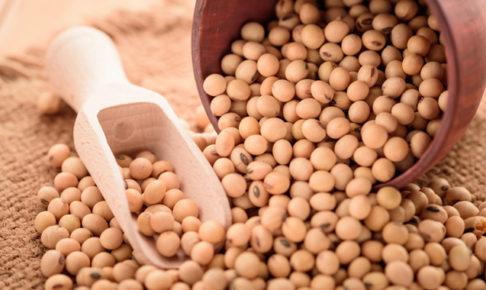 大豆(ダイズ)の育て方・栽培方法