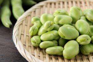 そら豆(ソラマメ)の育て方・栽培方法