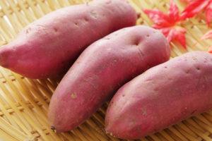 サツマイモの育て方・収穫方法