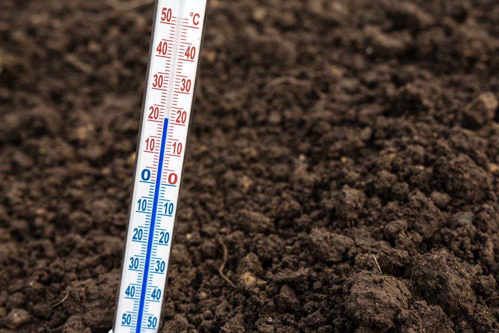 種の発芽温度