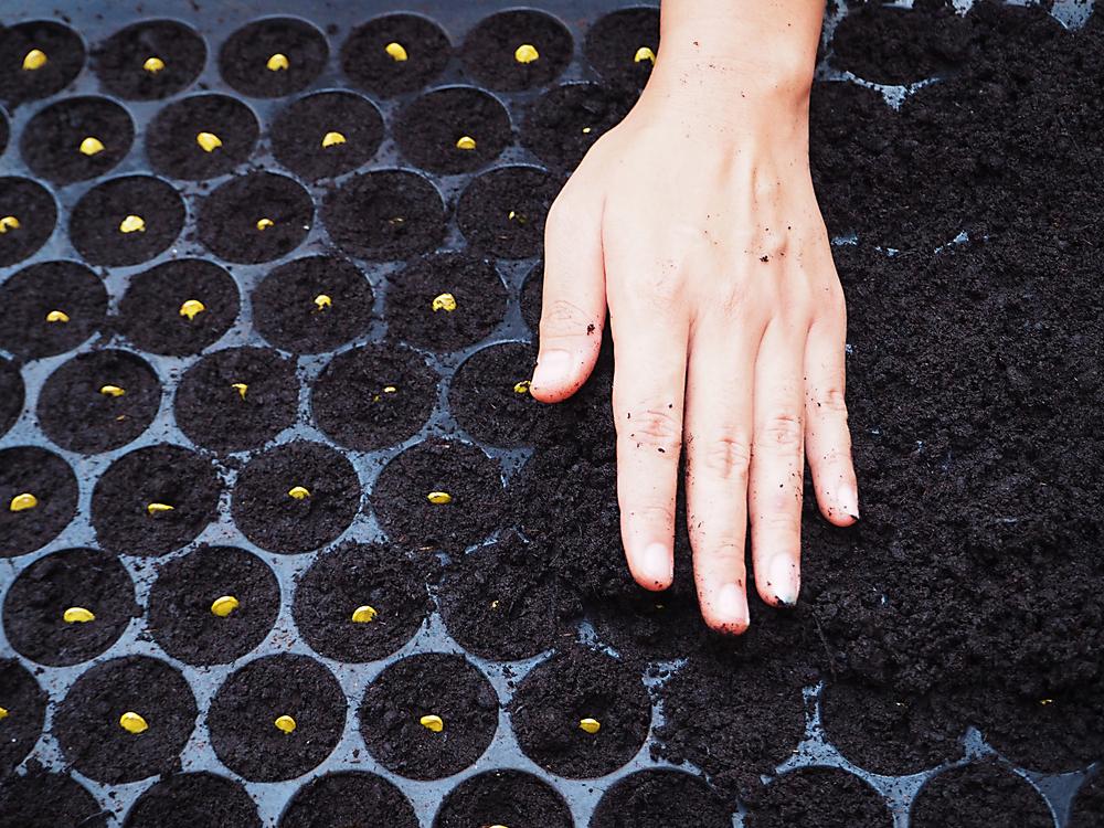 種に土をかぶせる