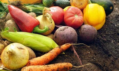 プランター野菜