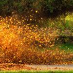 ブロアーで葉っぱを飛ばす