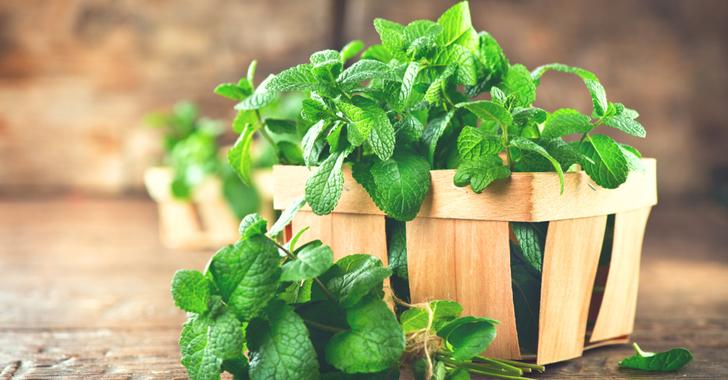 ミントの育て方・栽培方法