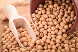 大豆の育て方・栽培方法