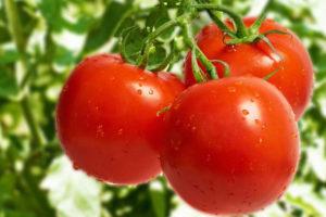 トマトを赤くする簡単な方法!