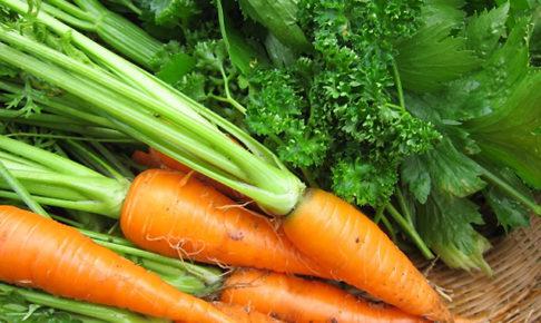 セリ科の野菜一覧