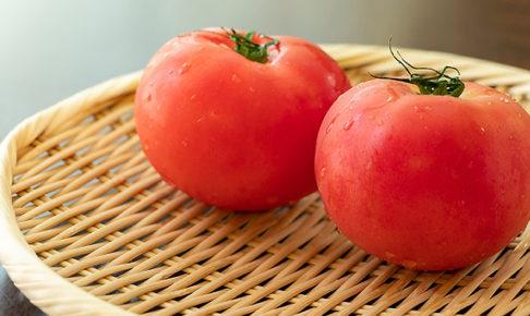 トマト収穫時期の見極め方は?