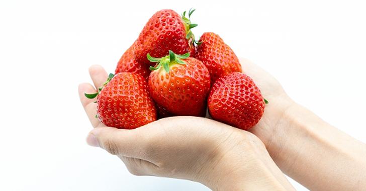 イチゴの収穫方法