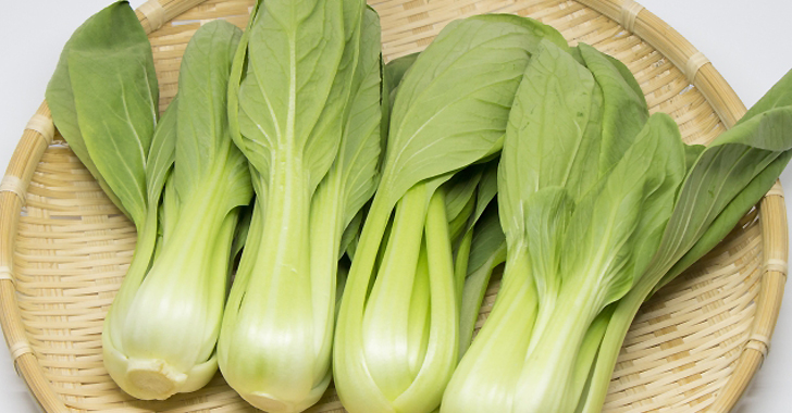 チンゲン菜の収穫時期と収穫方法は?