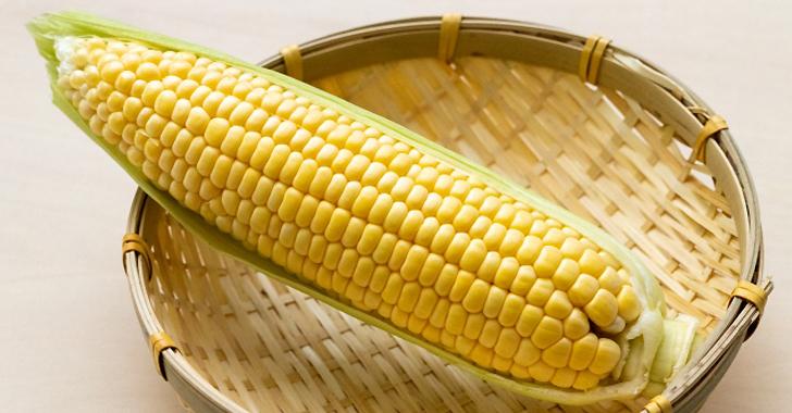 トウモロコシの収穫について