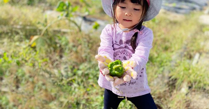 ピーマンを収穫する女の子