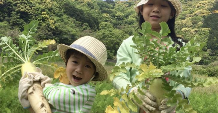 大根を収穫する子供たち