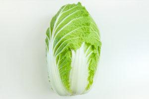 白菜の収穫時期と収穫方法は?