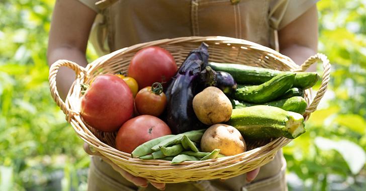 野菜をかごに収穫する女性