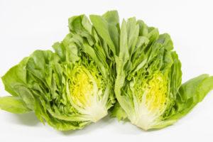 サラダ菜の水やり頻度や時間帯は?
