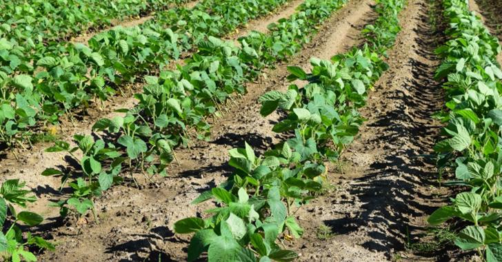 大豆の収穫について