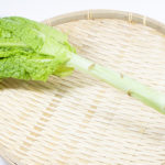 茎レタス(ステムレタス)の育て方・栽培方法